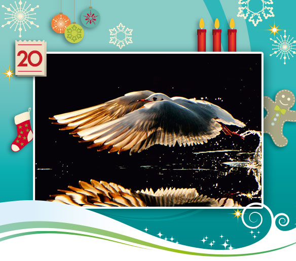 20-adventskalender-2013