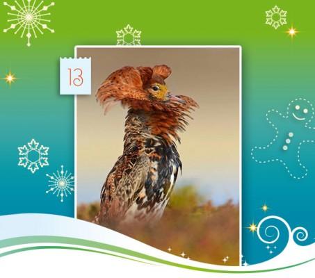 13-adventskalender-2014