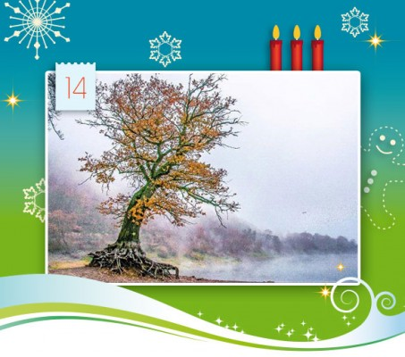 14-adventskalender-2014