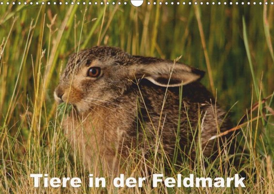 tiere_feldmark