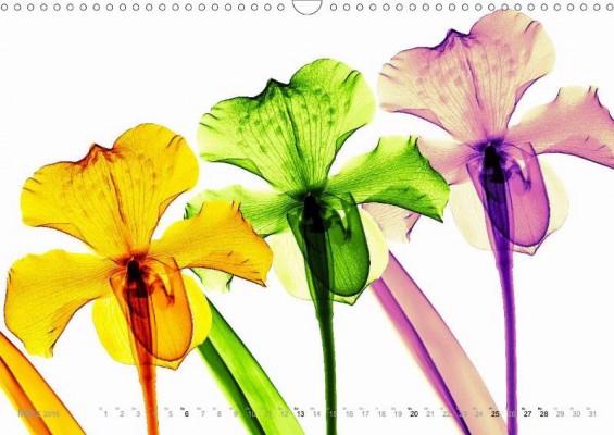 fleurs_maerz