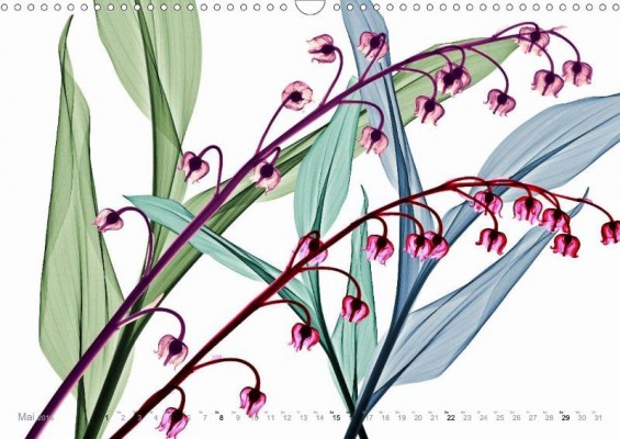 fleurs_mai
