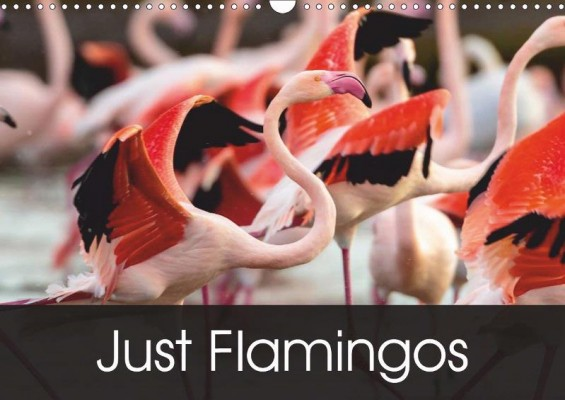 'Just Flamingos' calendar