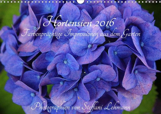 Steffani_Lehmann_Hortensien