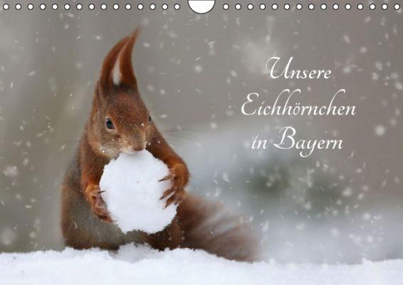 Birgit-Cerny_Unsere-Eichhörnchen-in-Bayern