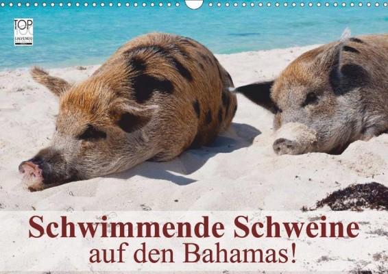 Stanzer_Schwimmende-Schweine-auf-den-Bahamas