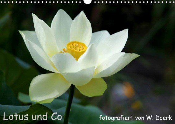 Wiltrud-Doerk_Lotus-und-Co