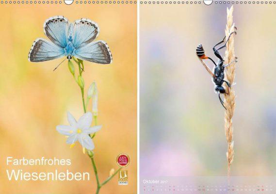 Perdita-Petzl_Farbenfrohes-Wiesenleben