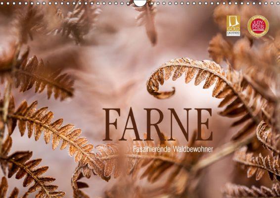 Markus-Wuchenauer_Farne