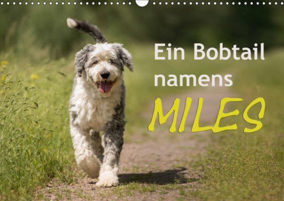 christiane-calmbacher_ein-bobtail-namens-miles